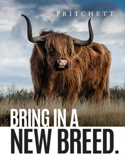 Bring In A New Breed